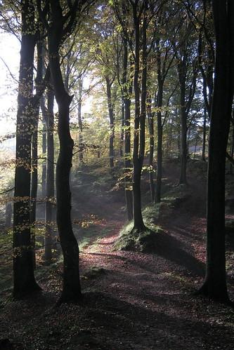autumn fall forest vejle skov efterår munkebjerg munkebjerghotel