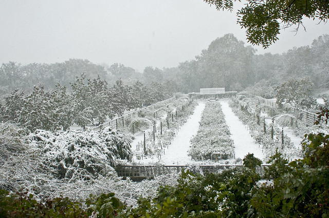 A rare October snow storm hits BBG during Ghouls & Gourds 2011.  Photo by Mike Ratliff.