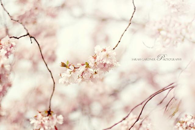 Floral_blog_014