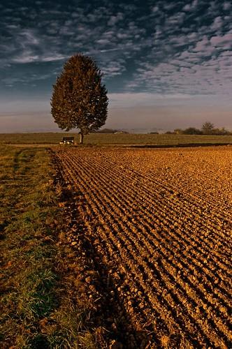 field feld baum acker bänkchen kirchentellinsfurt
