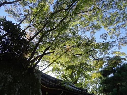 Otani Soboyo - Kyoto by girl from finito