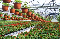 Commercial Greenhouse Watering System