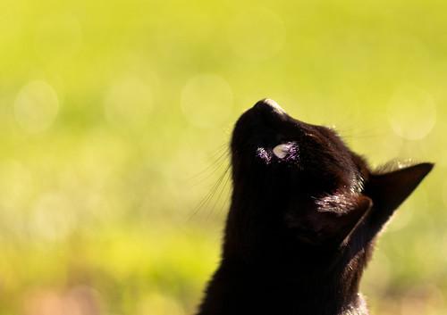 無料写真素材, 動物 , 猫・ネコ