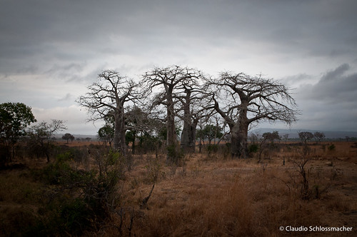 africa tanzania afrika mikumi tansania iringa 2011 jorai tanzânia claudioschlossmacher