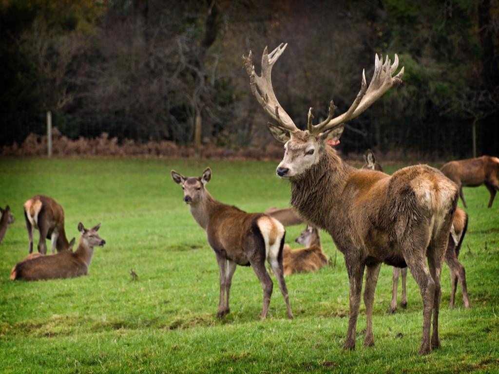 Deers SWC34_20101113_10_DxO_1024x768