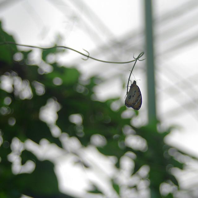 吉隆坡蝴蝶馆