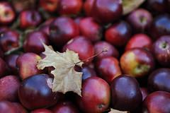 plant(0.0), damson(0.0), zante currant(0.0), berry(1.0), produce(1.0), fruit(1.0), food(1.0), myrciaria dubia(1.0),