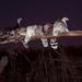 Guajolotes - Turkeys roosting for the night; San Miguel Peras, Oaxaca, Mexico por Lon&Queta