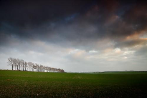 tree landscape photography row