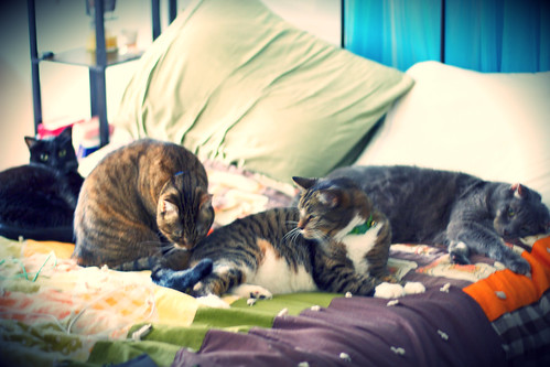 cats 2!!