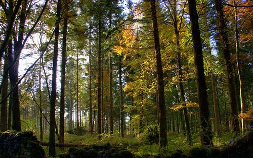 ireland forest autum countyroscommon roscommon motepark autumcolours knockcroghery croftontrail