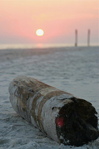 sunset sun beach log florida