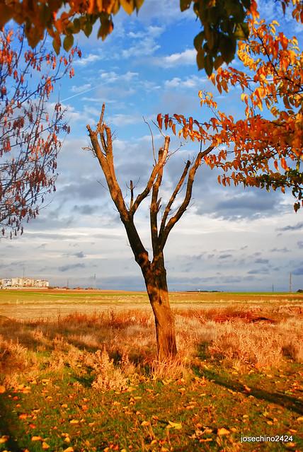 Arbol seco en otoño