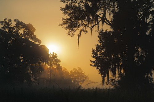 morning mist tree fog rural sunrise landscape louisiana 85mm mrgreenjeans gaylon canonef28135mmf3556isusm peairsrd gaylonkeeling