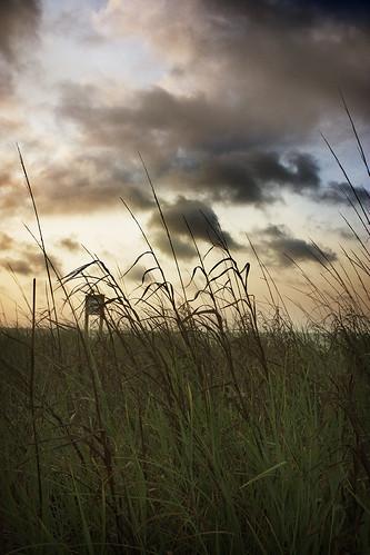 ocean beach grass clouds sunrise nc northcarolina sanddunes familyvacation holdenbeach2011 thisiswaybetterthantheoverpricedouterbanks