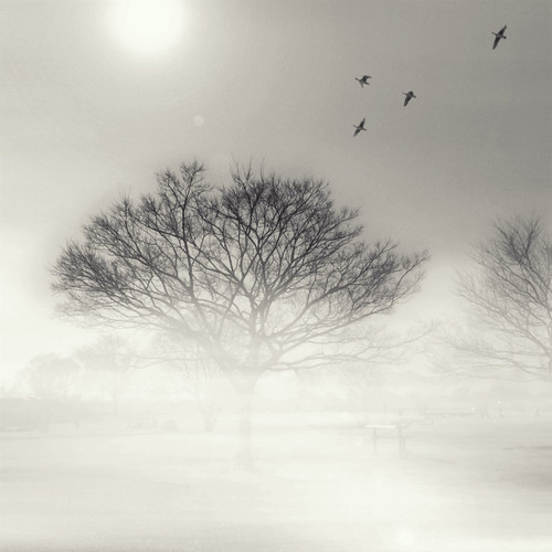 Tree pic #08