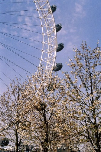 The London Eye, Sping 2002   (35mm) by Stocker Images
