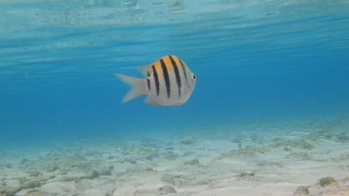 snorkeling castawaycay disneydream
