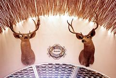 antler(1.0), deer(1.0), illustration(1.0), reindeer(1.0),