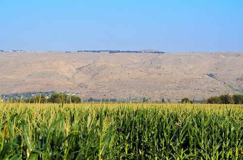 blue sky green fall field israel corn cornfield north ישראל golanheights golan נוף agamon שמיים שדה רמתהגולן hahula החולה אגמון תירס