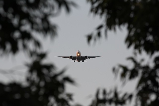 "Incoming plane framed by leaves - Emirates  ""Sky Cargo"" Boeing 777-F1H A6-EFF"