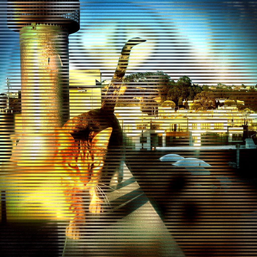 "Daily App Experiment #296 ""Catwalk"""