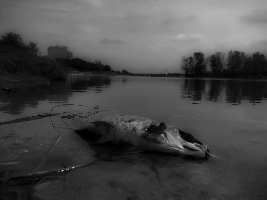 White Wash Spiegel : Angeschwemmt washed ashore wasser spiegel donau water u2026 flickr