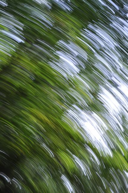 A brisk walk beneath a canopy of green