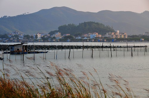 china morning wild net water grass fishing village mel melinda gunagdong 漁村 huidong 白沙村 chanmelmel 惠東 melindachan 鹽洲