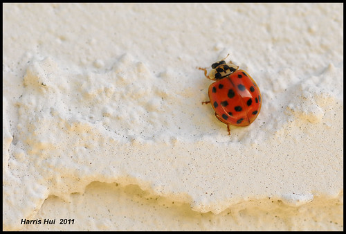 Occupy The Wall (Street)! - Ladybug N7764e