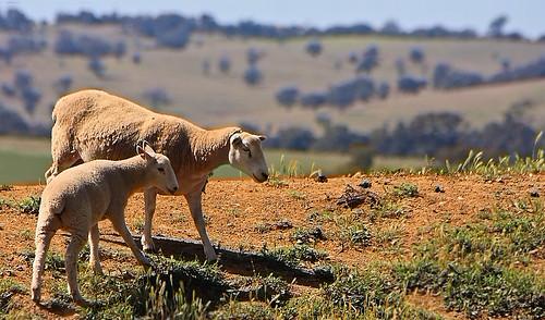 Rural Australia (1)