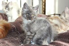 Enzo (born 13/08/2011)