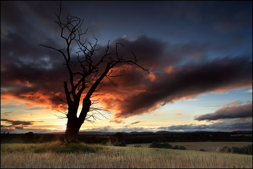 Dead Tree @ Sunset Strathmore