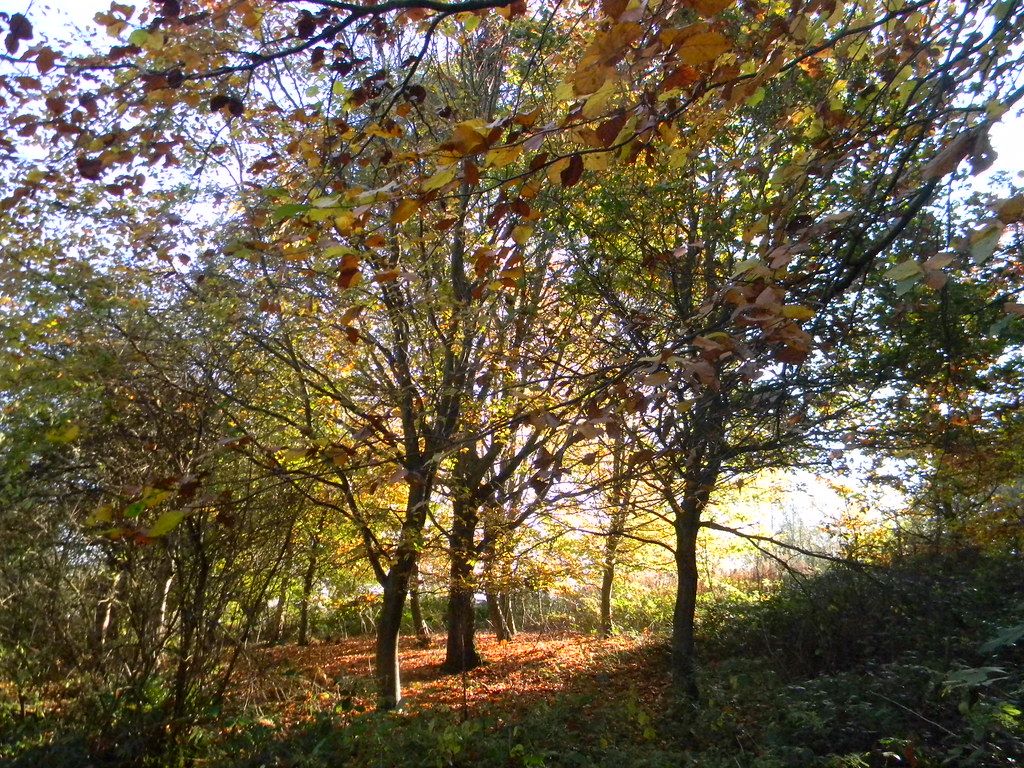 Autumn trees Cowden (short) Circular