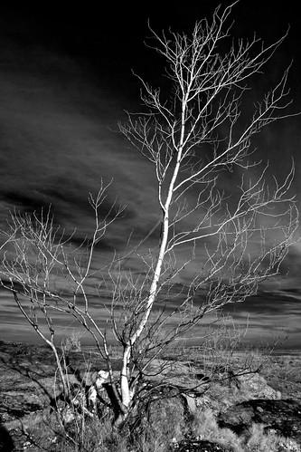 sky blackandwhite tree clouds ir rocks infrared birch
