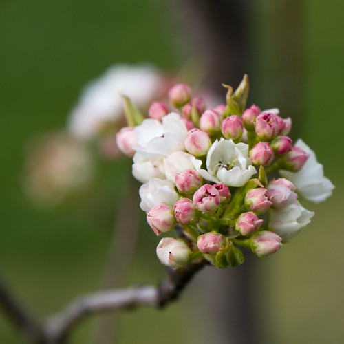 flowers trees spring nikon bokeh blossoms d90