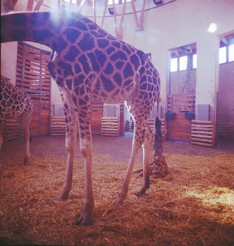 Lara&Zoo_0001