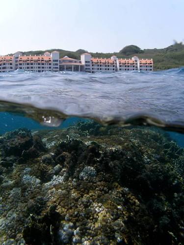 岸上美麗灣,水下就是珊瑚礁_中研院珊瑚礁演化生態暨遺傳實驗室