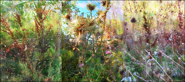 Autumn Interlude: Fall Weeds