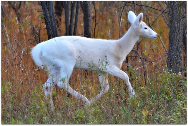 wild animal white - photo #29