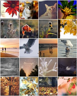 Tilt ~ Frost, flames, flowers and furfaces ~ thank you xoxo