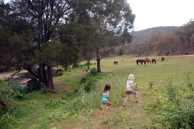 horses in the campsite