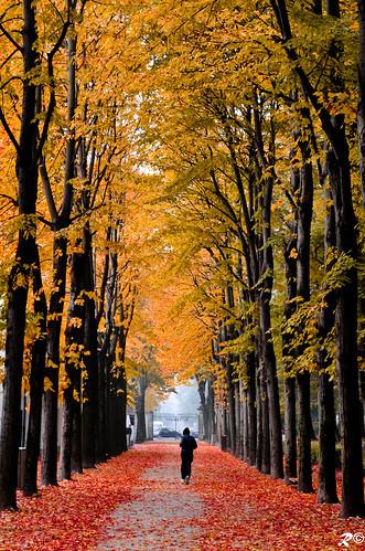 Run to autumn exit