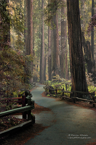 An Ancient Redwood Forest