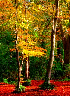 Woodland colours