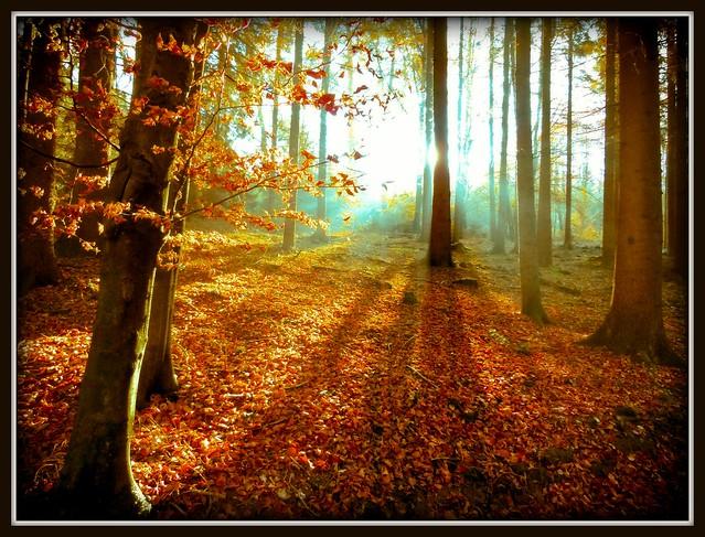Herbst bei Helmerhausen