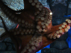 coral(0.0), animal(1.0), octopus(1.0), organism(1.0), marine biology(1.0), invertebrate(1.0), macro photography(1.0), marine invertebrates(1.0),