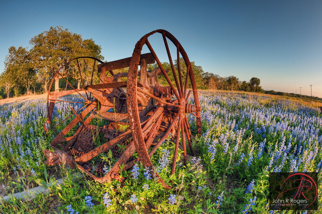 Bluebonnets and Rust