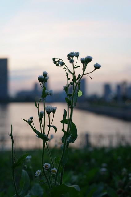 夕暮れ時の空の下で 2011/06/30-02