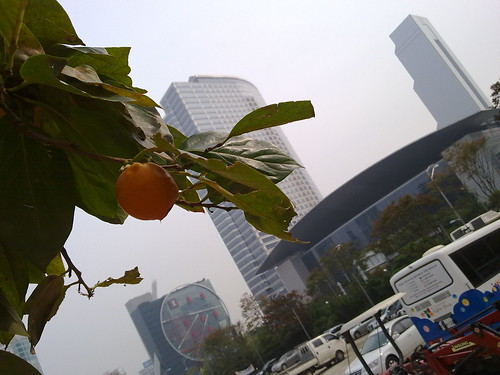 persimmon in the centre of concrete jungle